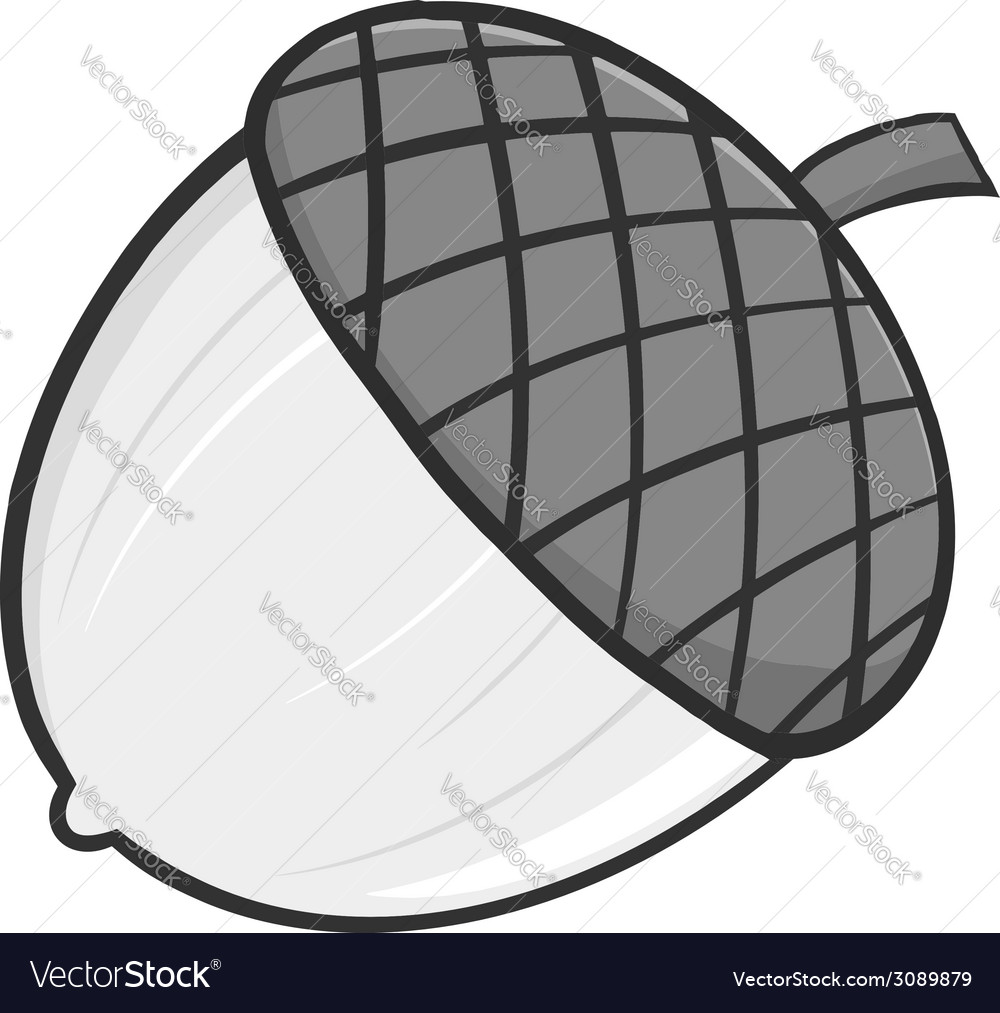 Cartoon acorn vector