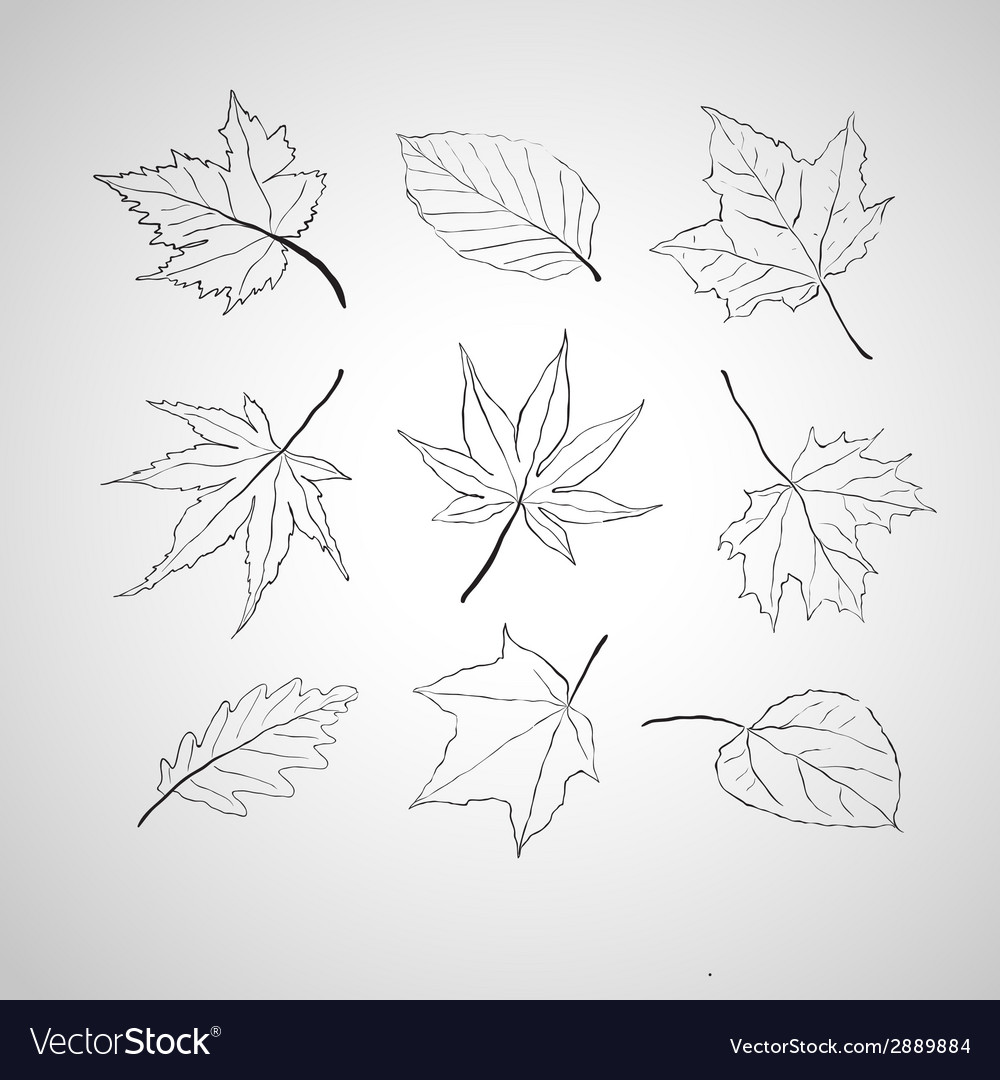 Leaves outline vector | Price: 1 Credit (USD $1)