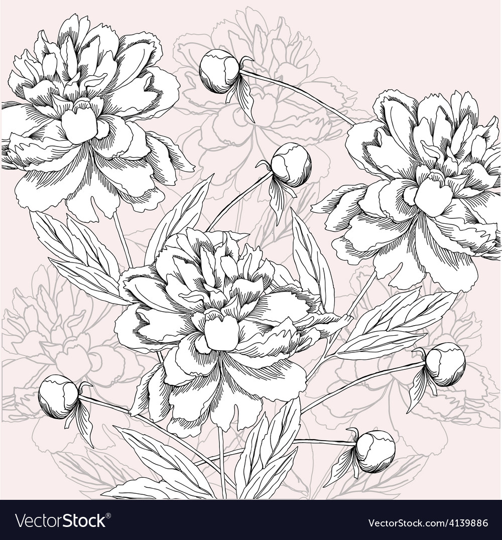 Background with black and white peony vector | Price: 1 Credit (USD $1)