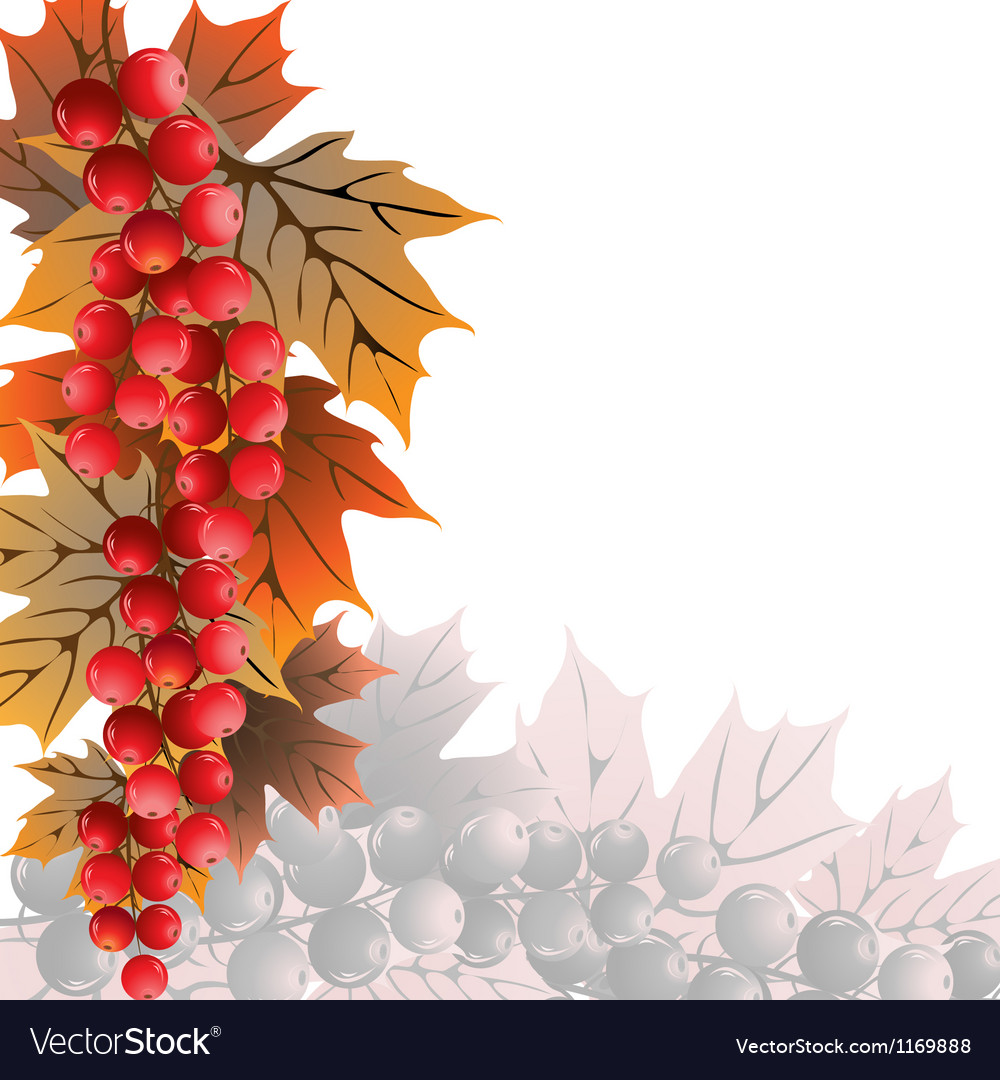 Red currant on white vector | Price: 1 Credit (USD $1)