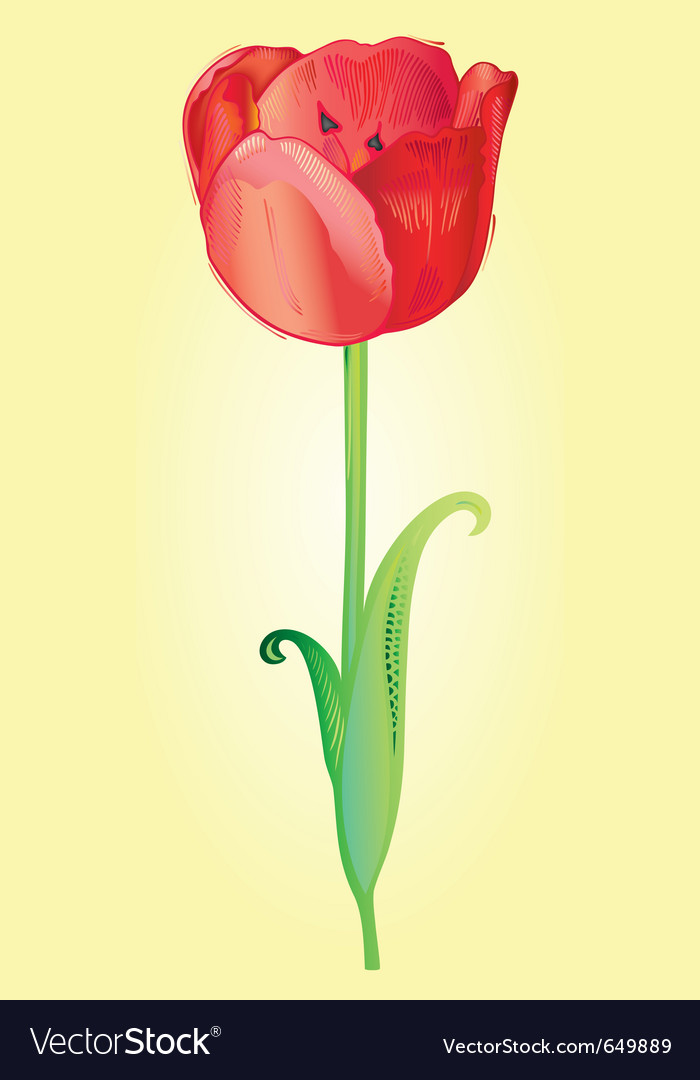 Tulip vector | Price: 1 Credit (USD $1)