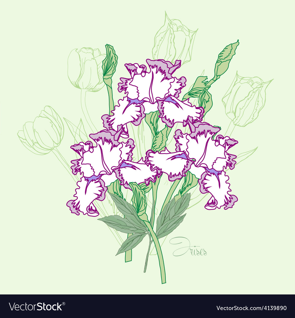 Bouquet with three irises vector | Price: 1 Credit (USD $1)