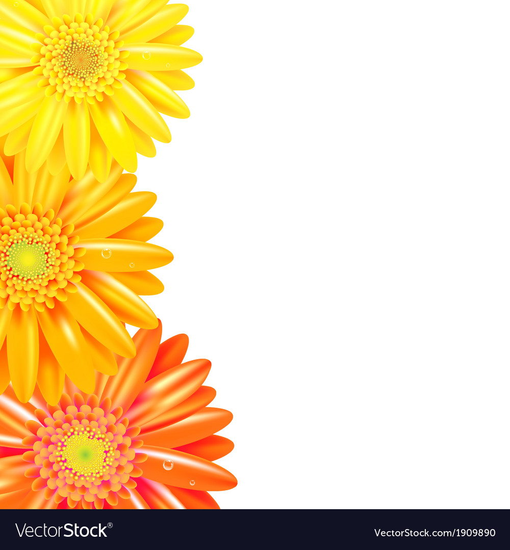 Yellow and orange gerbers border vector | Price: 1 Credit (USD $1)