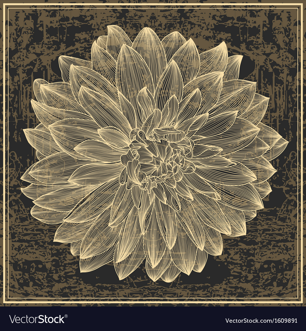 Drawing of dahlia flower on grunge background vector | Price: 1 Credit (USD $1)