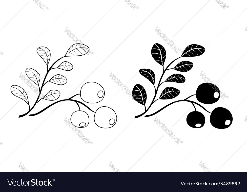 Branch of cowberry - black vector   Price: 1 Credit (USD $1)