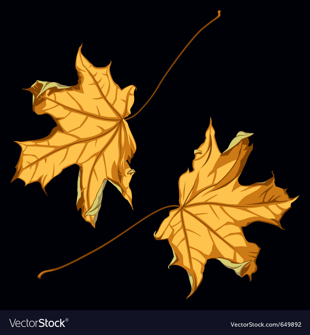 Pair of falling down maple leafs on black backgrou vector | Price: 1 Credit (USD $1)