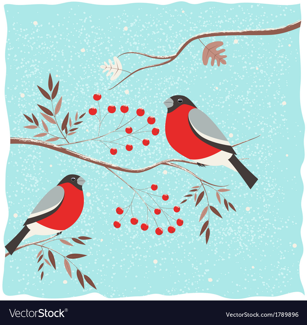 Bullfinch on the branch vector | Price: 1 Credit (USD $1)