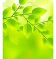 Fresh green leaves abstract background vector