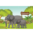 Two elephants with a wooden sign board at the back vector