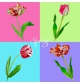 Background with tulips3-03 vector