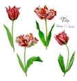 Tulips watercolor vector