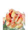 Different color tulips isolated on white eps 10 vector