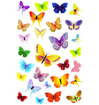 Butterflies party vector