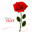 Background with beauty red rose vector