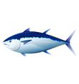 Bluefin tuna fish vector