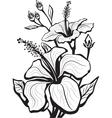 Sketch of hibiscus flowers vector