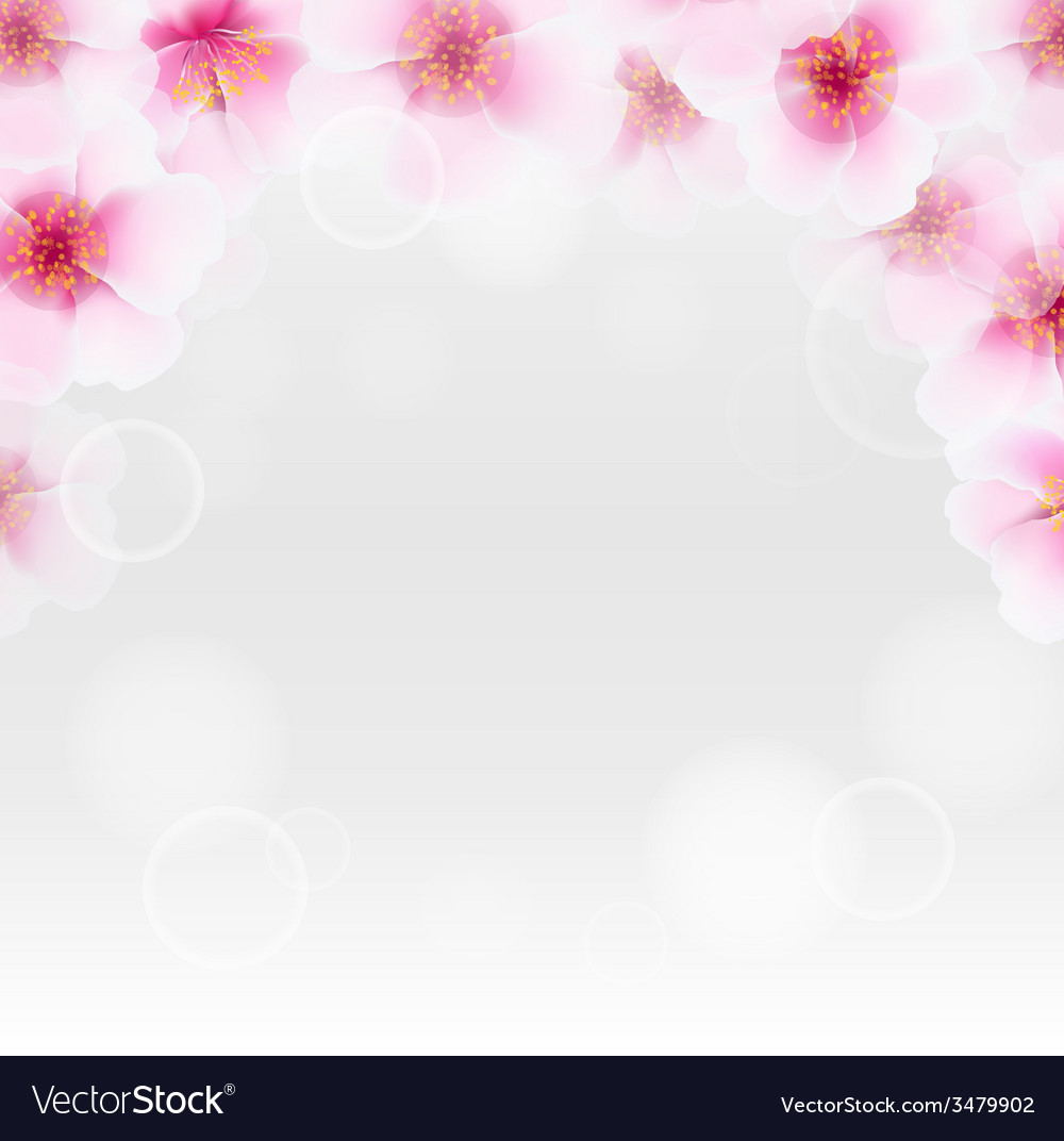 Cherry flower border with blur vector | Price: 1 Credit (USD $1)