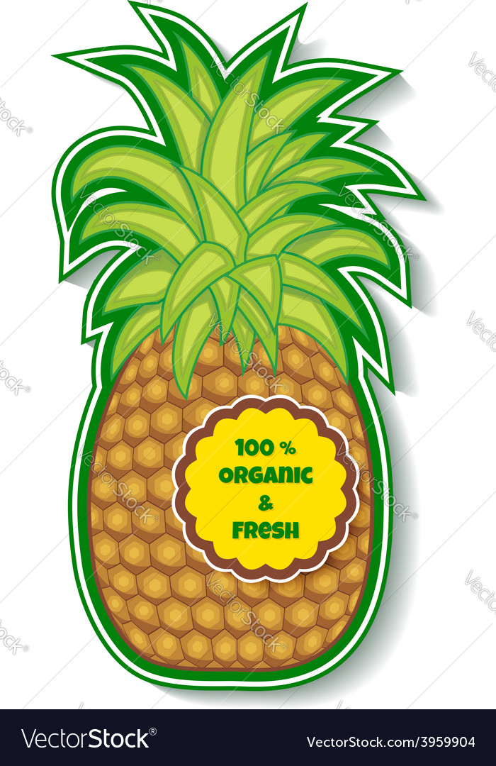Organic pineapple vector | Price: 1 Credit (USD $1)