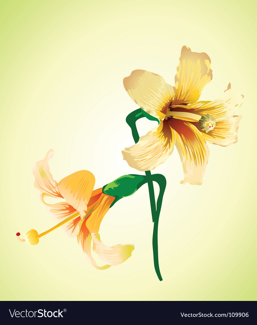 Elegant flower vector | Price: 1 Credit (USD $1)
