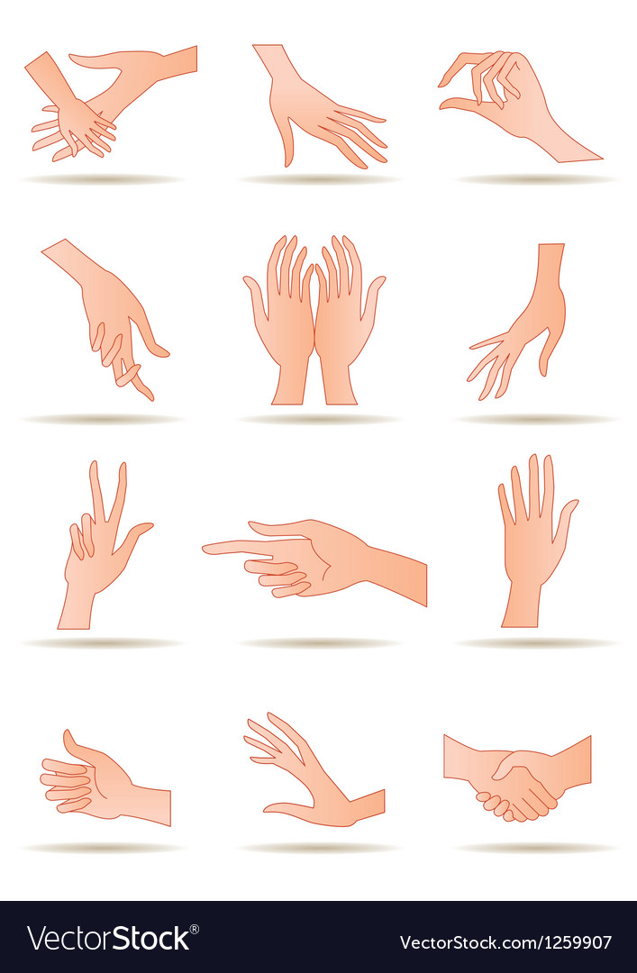 Human hands in different positions vector | Price: 3 Credit (USD $3)