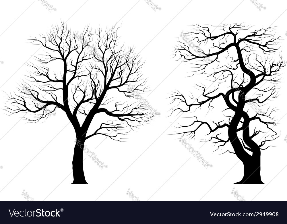 Silhouettes of old huge trees over white vector | Price: 1 Credit (USD $1)