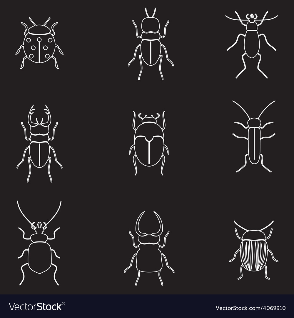 Bugs and beetles outline icons set eps10 vector | Price: 1 Credit (USD $1)