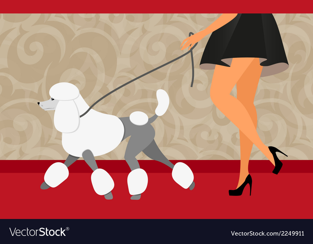 Elegant woman walk with her poodle vector | Price: 1 Credit (USD $1)