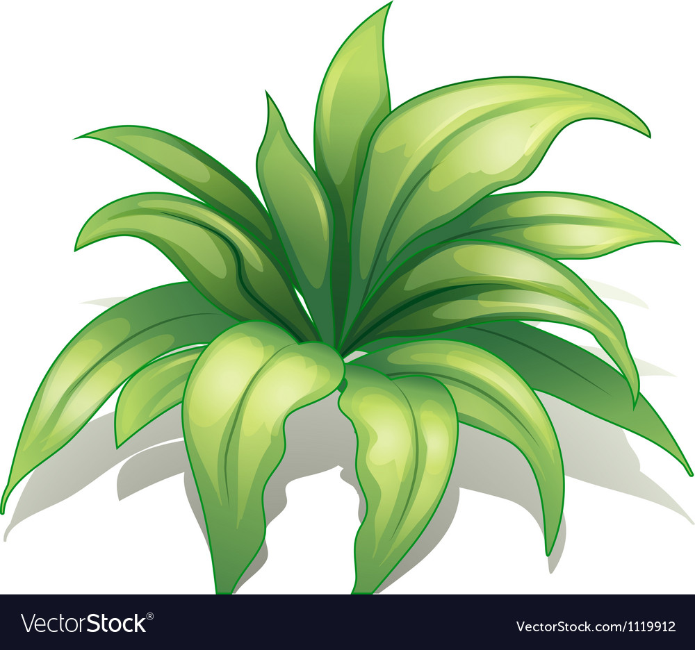 A plant vector   Price: 1 Credit (USD $1)