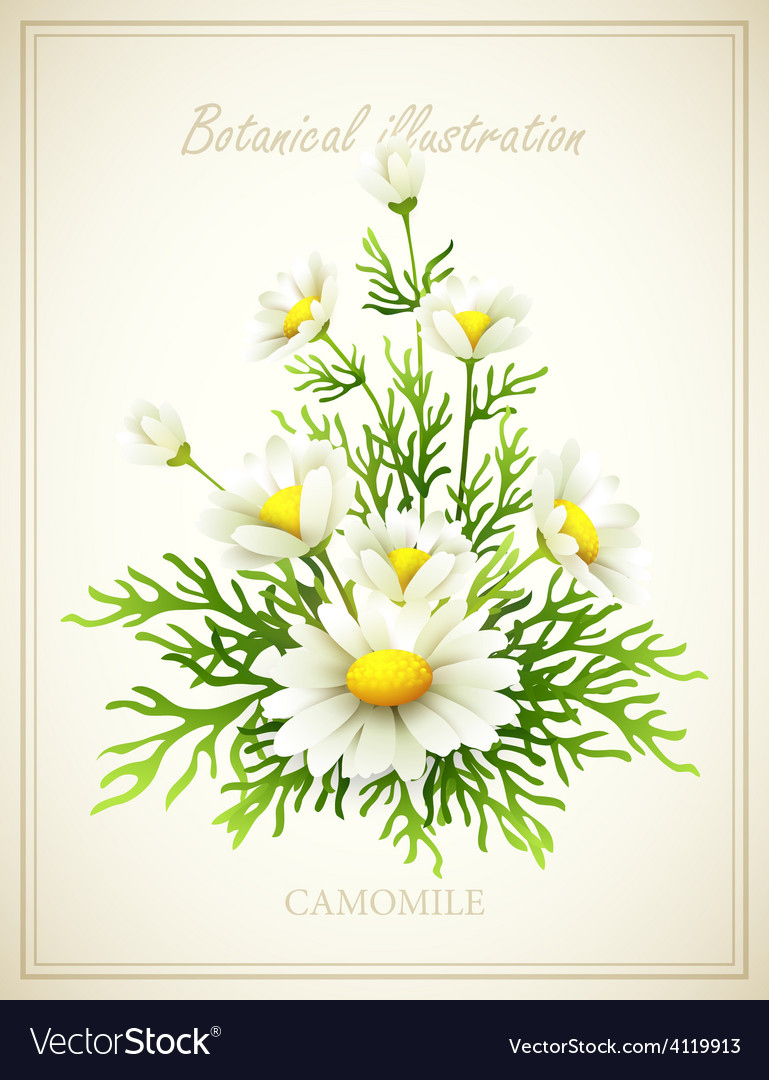 Flower vector   Price: 3 Credit (USD $3)
