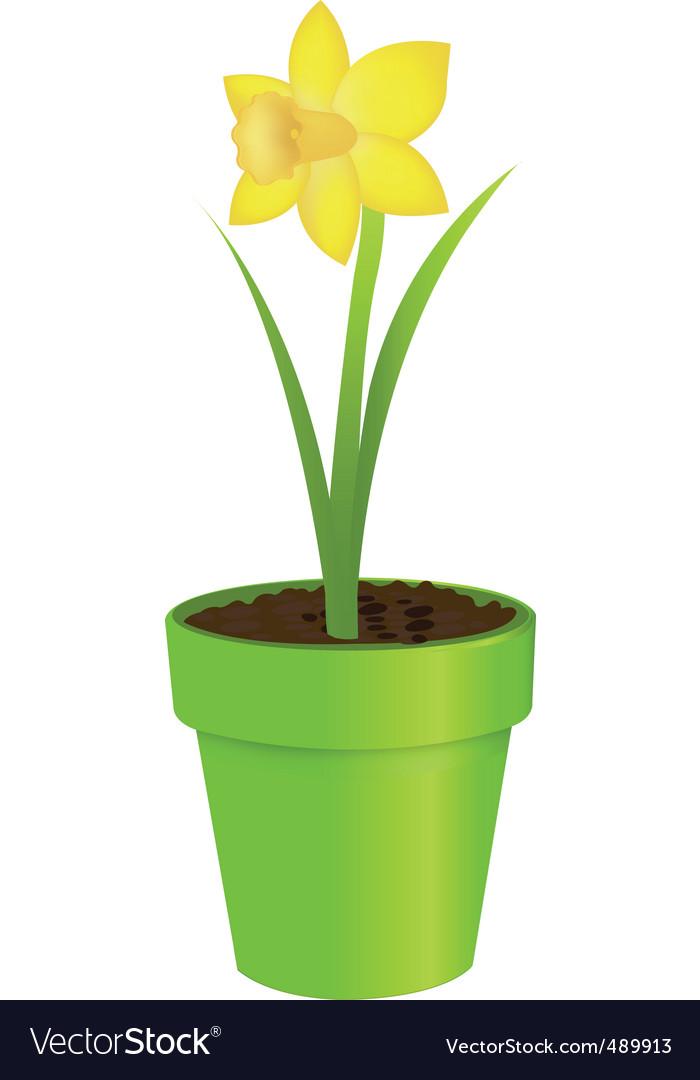 Narcissus in pot vector | Price: 1 Credit (USD $1)