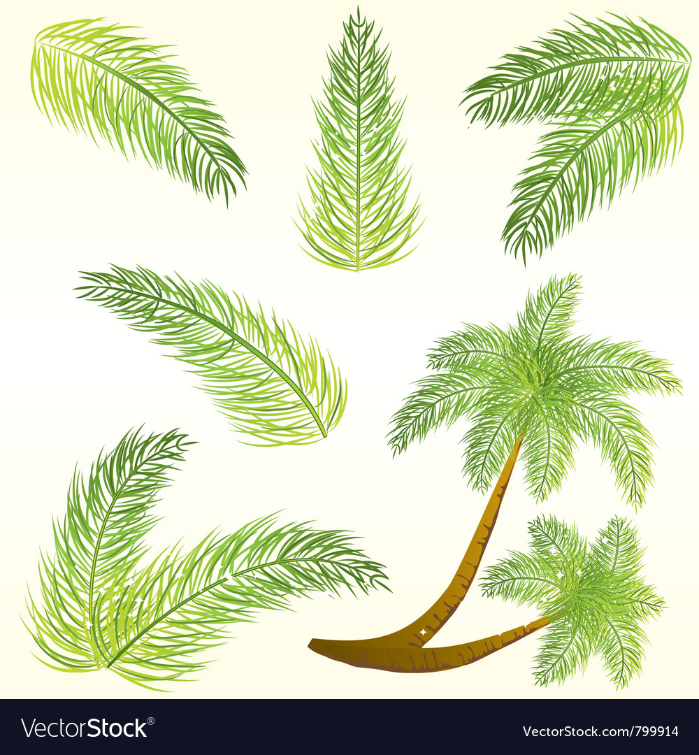 Tropical palm tree leaves vector | Price: 1 Credit (USD $1)