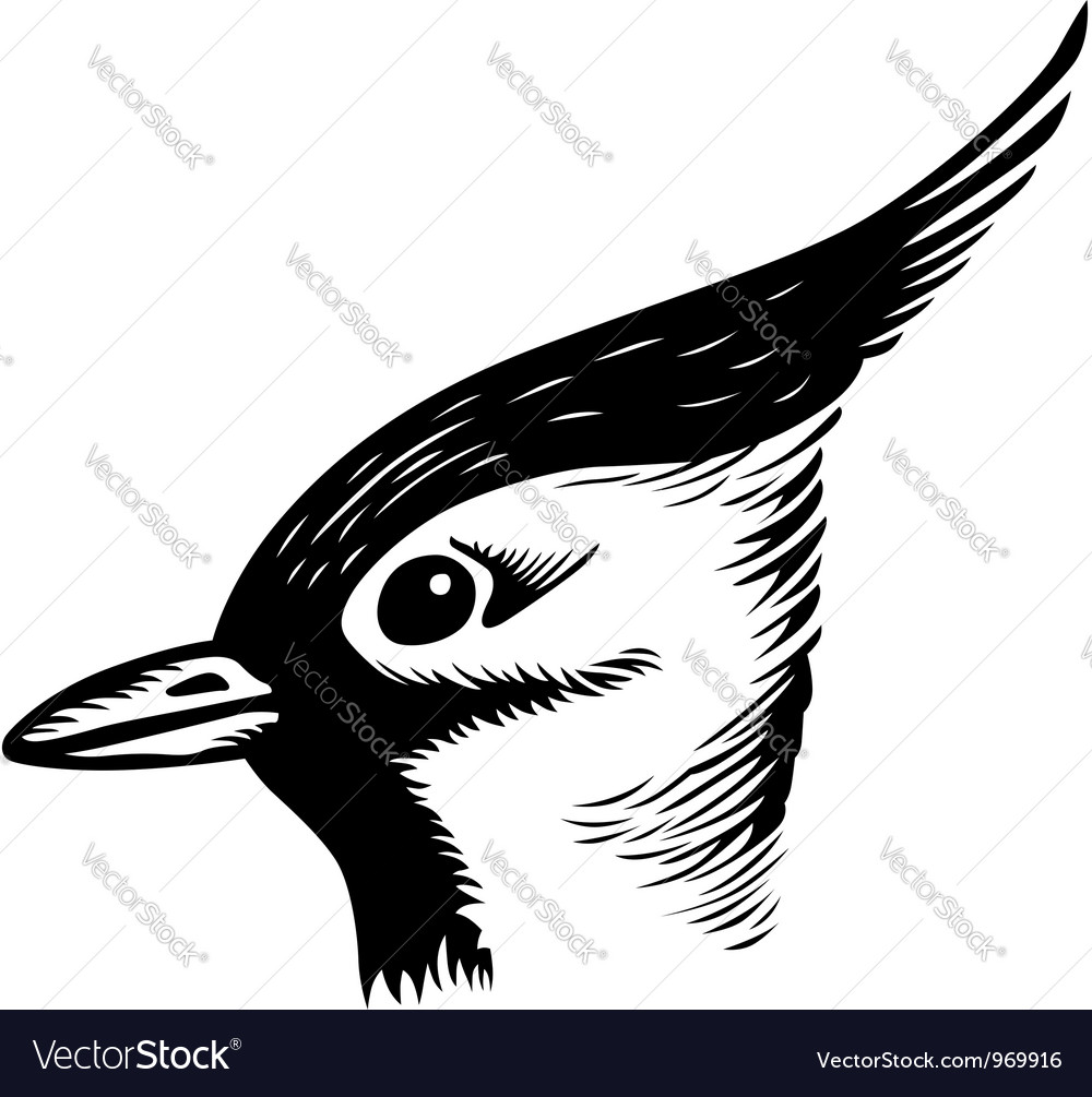 Head of a bird vector | Price: 1 Credit (USD $1)