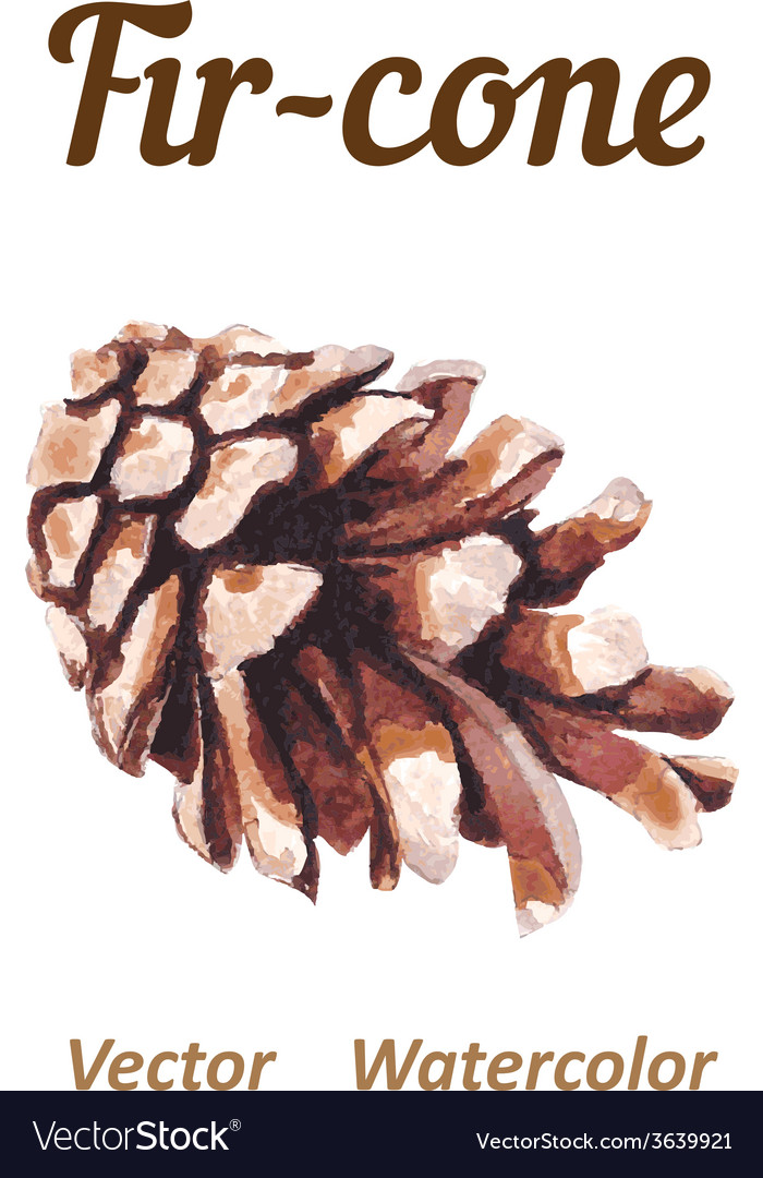Watercolor pine cone on a white background vector | Price: 1 Credit (USD $1)