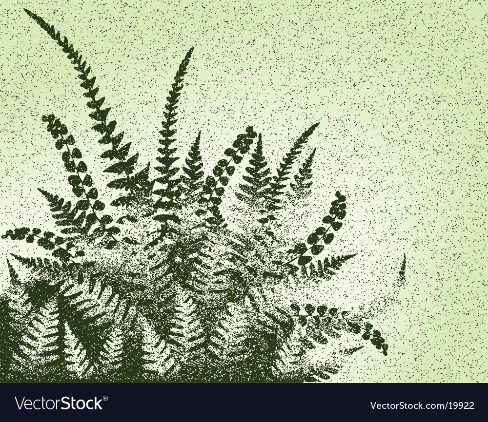 Fern grunge vector | Price: 1 Credit (USD $1)