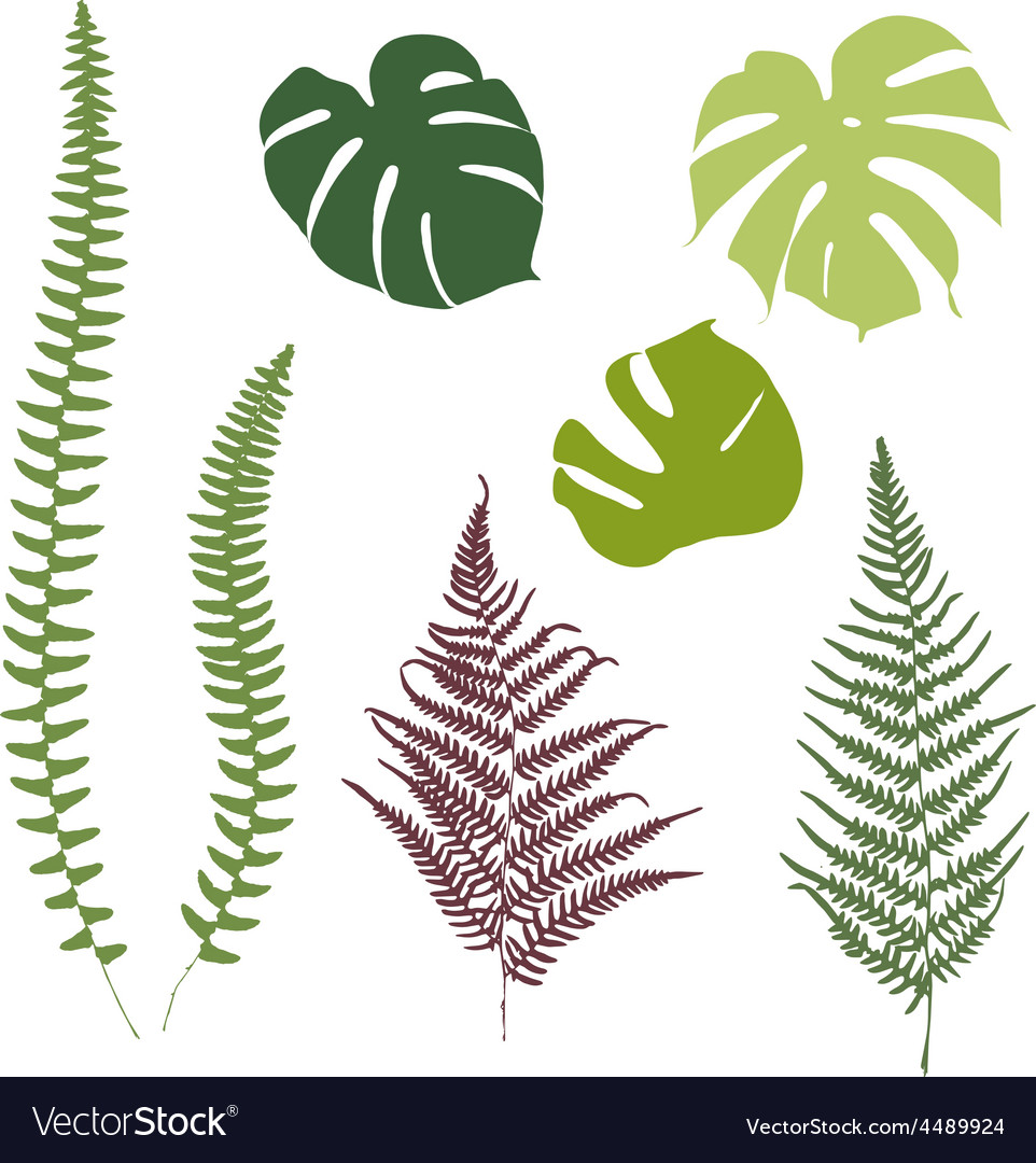 Fern and monstera silhouettes isolated on white vector | Price: 1 Credit (USD $1)