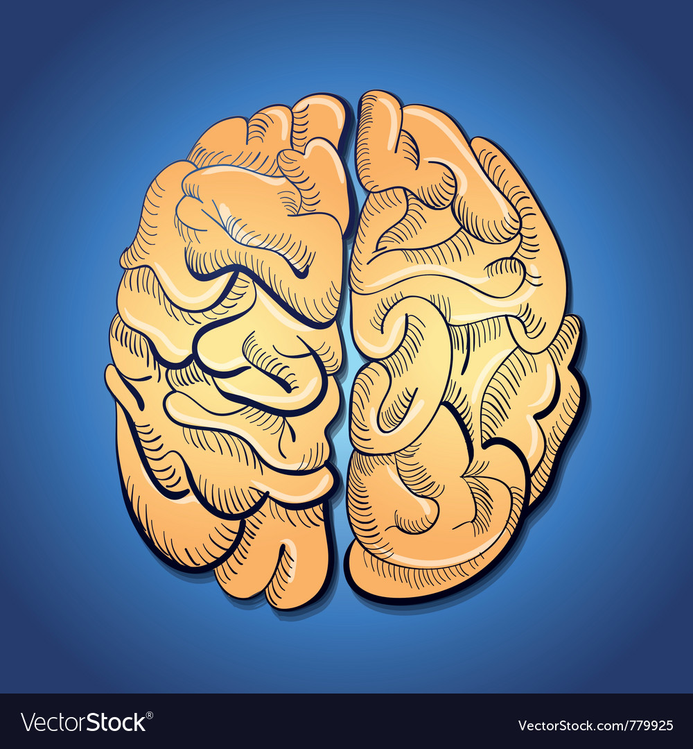 Brain and creativity vector | Price: 1 Credit (USD $1)