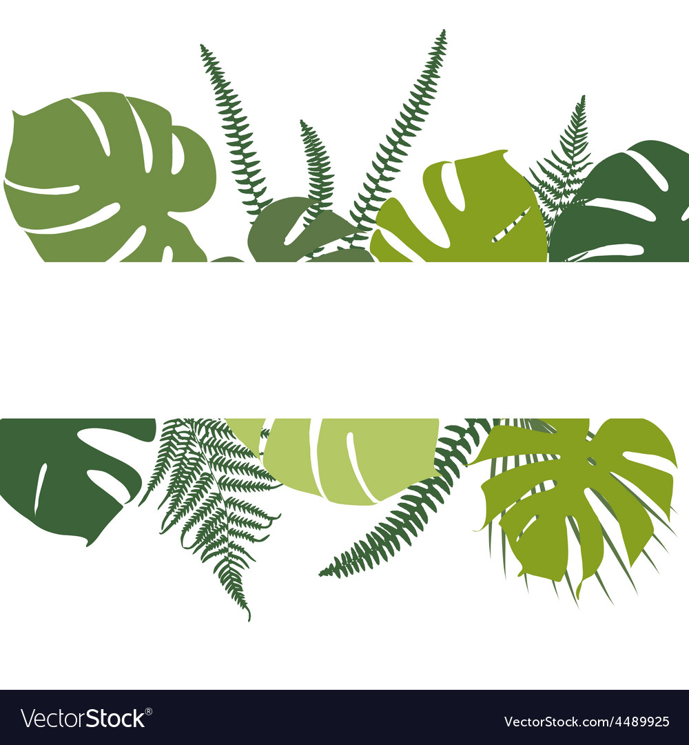 Tropical background with fern and monstera leaves vector | Price: 1 Credit (USD $1)