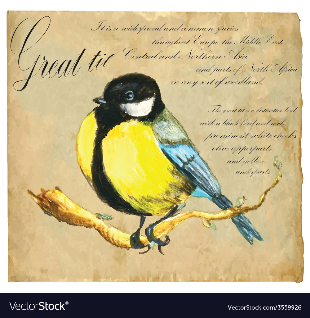 Hand painted bird tit vector | Price: 3 Credit (USD $3)