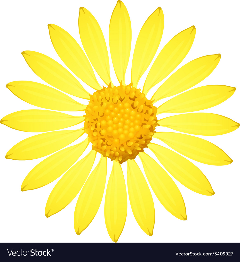 A yellow sunflower vector | Price: 1 Credit (USD $1)