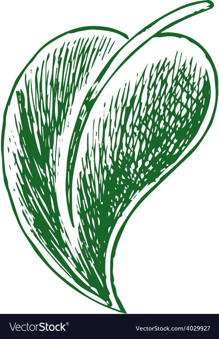 Macro green leaves vector   Price: 1 Credit (USD $1)