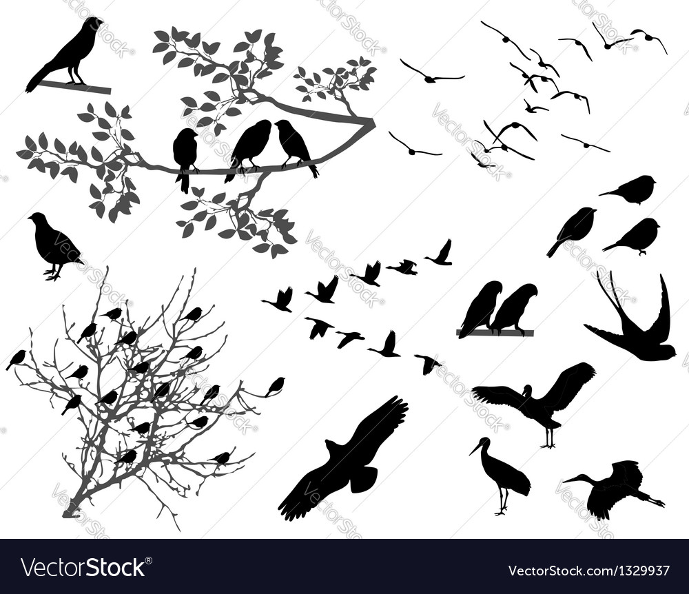 Birds vector | Price: 1 Credit (USD $1)