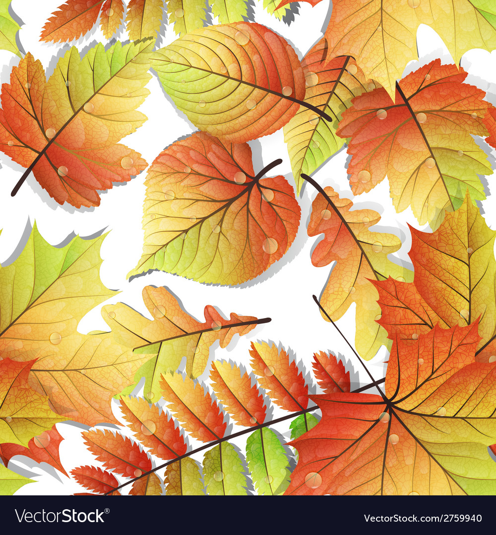 Colorful autumn seamless leaves isolated eps 10 vector | Price: 1 Credit (USD $1)