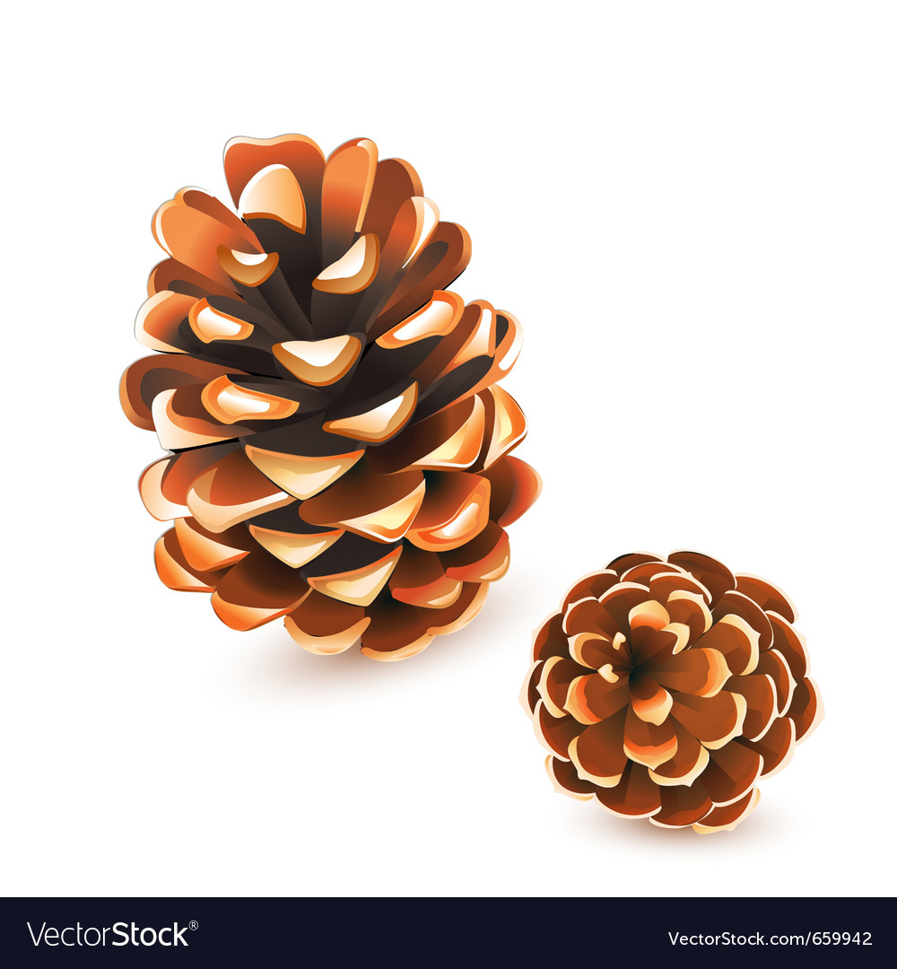 Pine cones vector | Price: 1 Credit (USD $1)