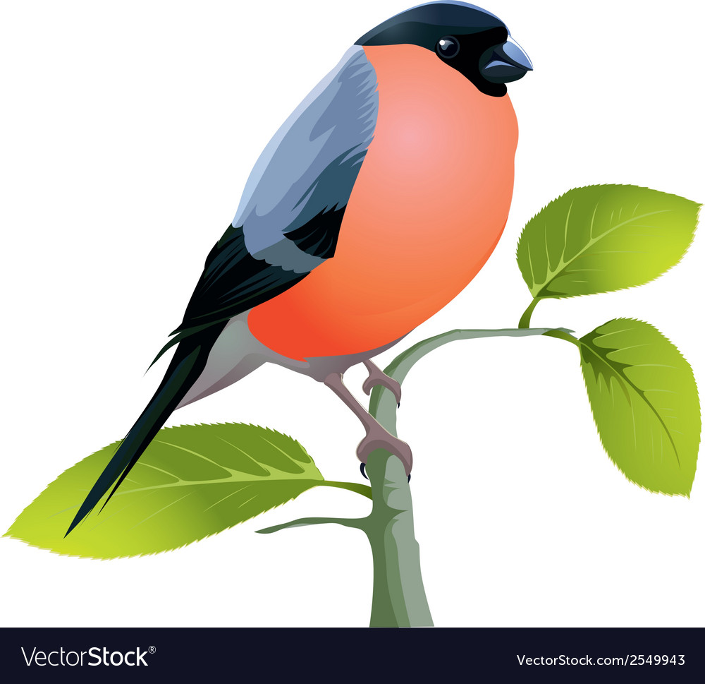 Beautiful bird vector | Price: 1 Credit (USD $1)