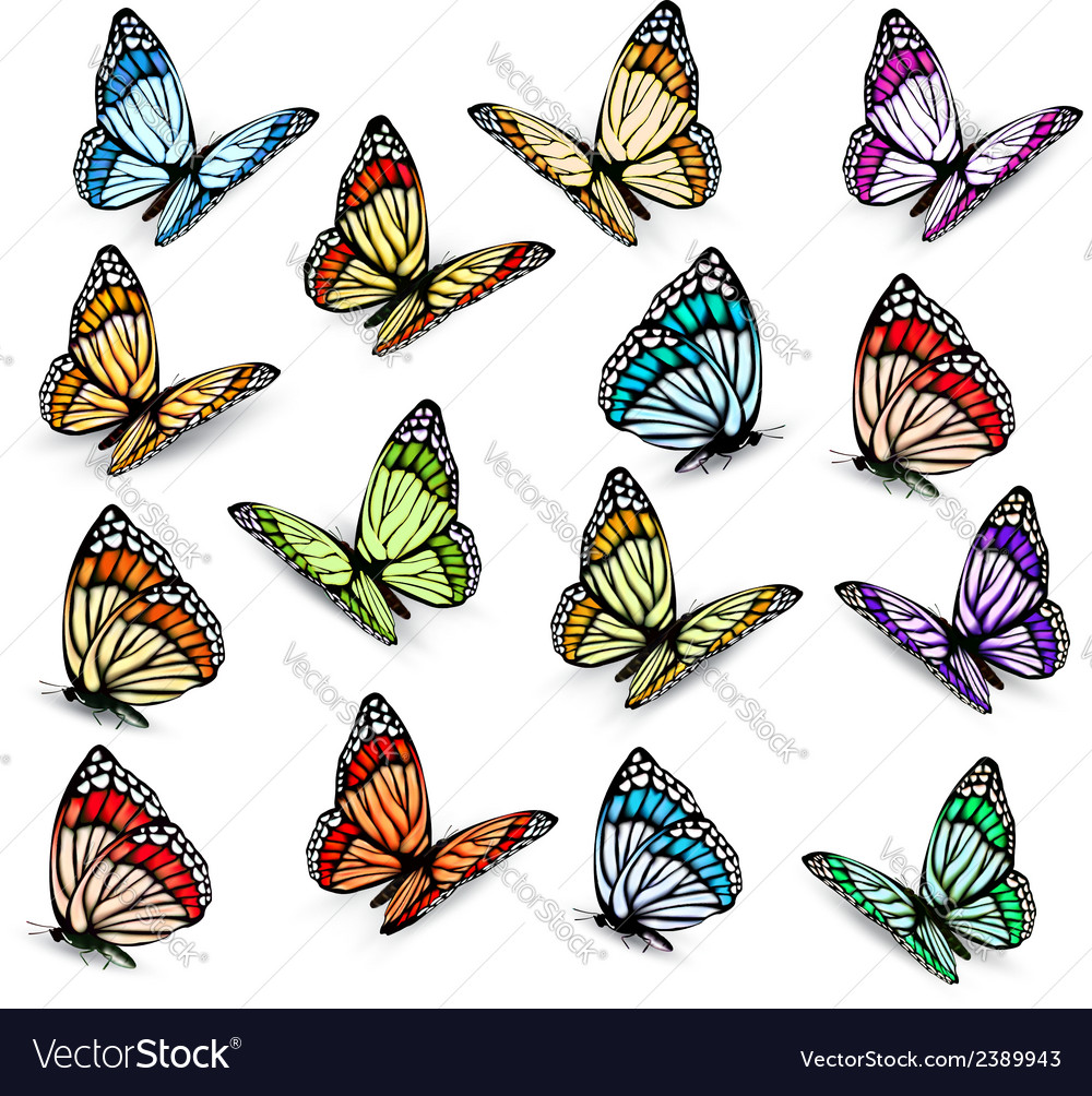 Set of realistic colorful butterflies vector | Price: 1 Credit (USD $1)