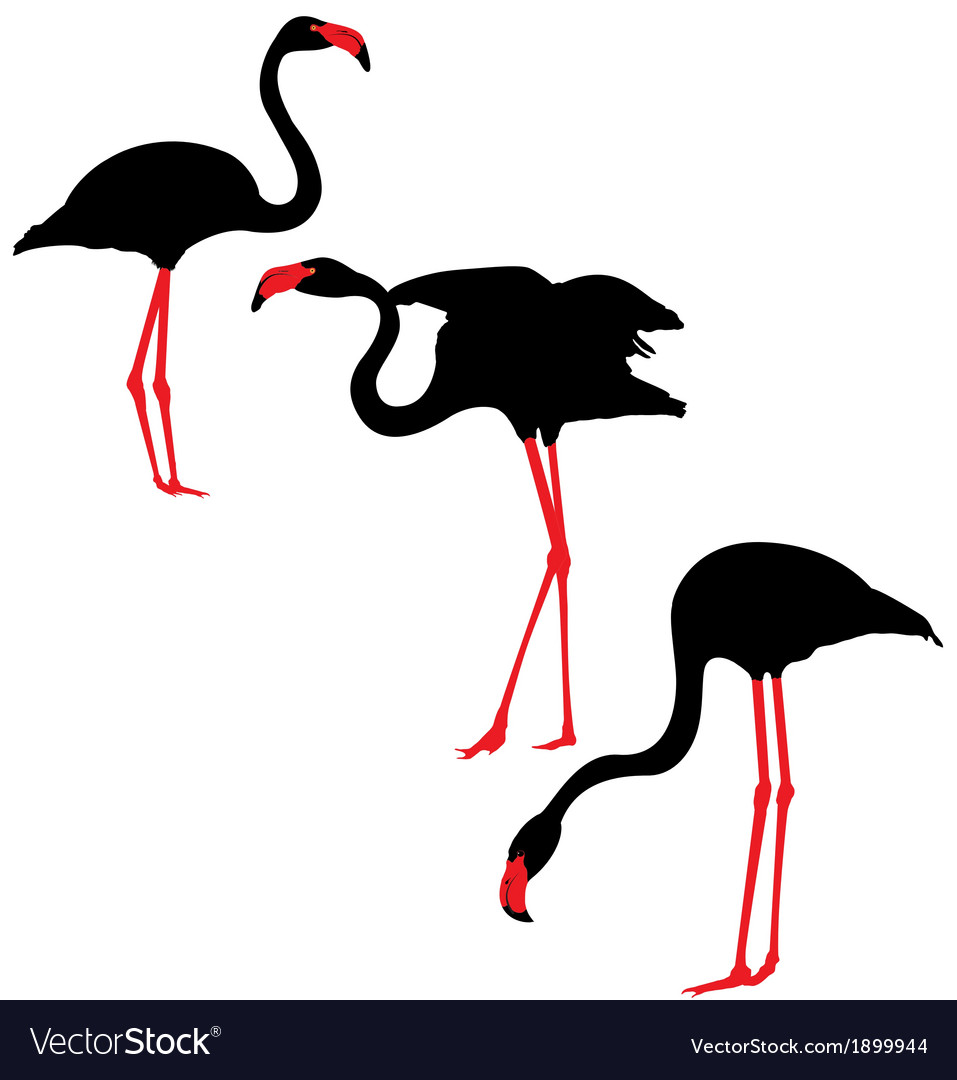Flamingo silhouettes vector | Price: 1 Credit (USD $1)