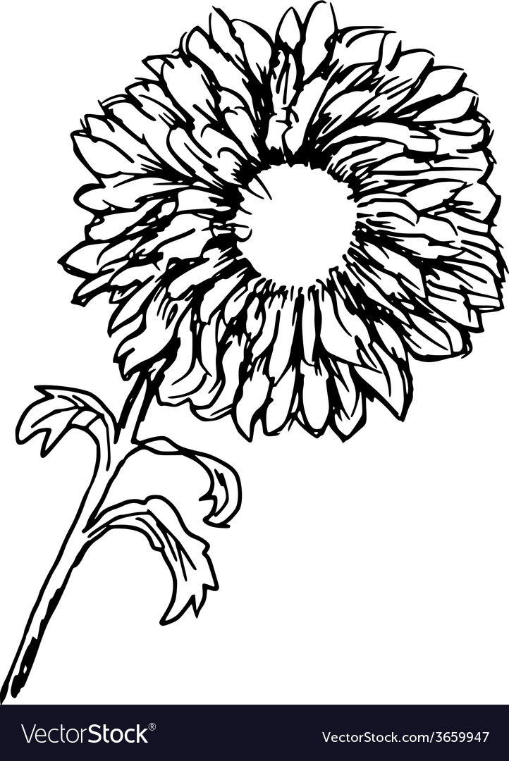 Chrysanthemum vector | Price: 1 Credit (USD $1)