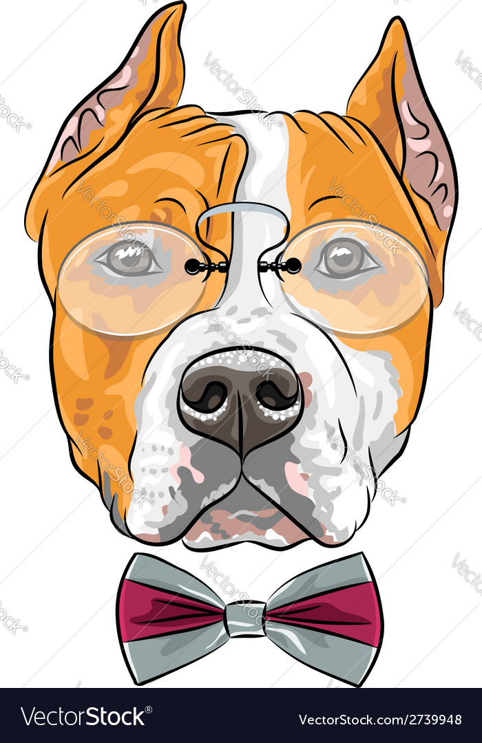 Dog american staffordshire terrier vector | Price: 1 Credit (USD $1)