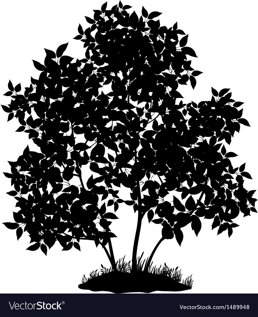 Lilac tree and grass silhouette vector | Price: 1 Credit (USD $1)