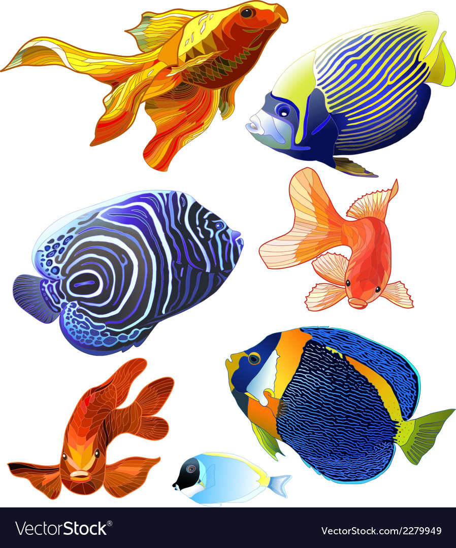 Set of exotic colorful fish vector | Price: 1 Credit (USD $1)